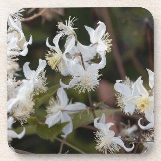 Blumen der Reisend-Freude (Clematis brachiata) Getränkeuntersetzer