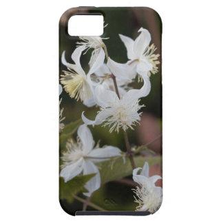 Blumen der Reisend-Freude (Clematis brachiata) iPhone 5 Hülle