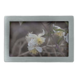 Blumen der Reisend-Freude (Clematis brachiata) Rechteckige Gürtelschnalle