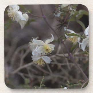 Blumen der Reisend-Freude (Clematis brachiata) Untersetzer