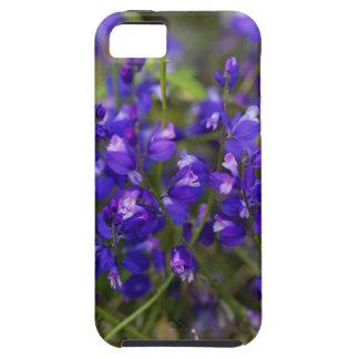Blumen des MilkwortPolygalamajors iPhone 5 Cover