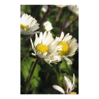 Blumen des weißen Gänseblümchens auf grünem Briefpapier