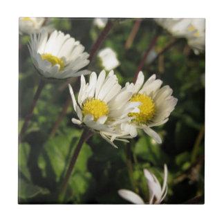 Blumen des weißen Gänseblümchens auf grünem Fliese