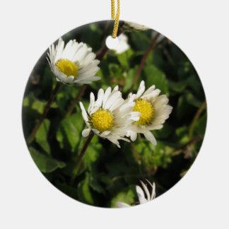 Blumen des weißen Gänseblümchens auf grünem Keramik Ornament