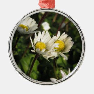Blumen des weißen Gänseblümchens auf grünem Silbernes Ornament