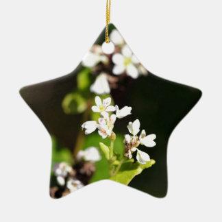 Blumen einer Buchweizen-Pflanze (Fagopyrum essbar Keramik Ornament