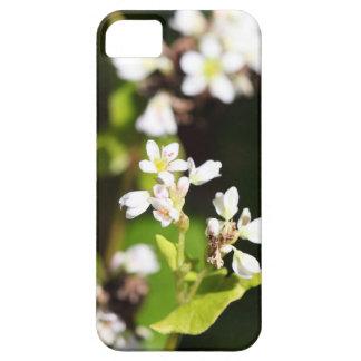 Blumen einer Buchweizen-Pflanze (Fagopyrum essbar Schutzhülle Fürs iPhone 5