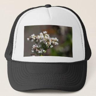 Blumen einer Buchweizen-Pflanze (Fagopyrum essbar Truckerkappe