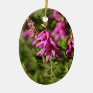 Blumen eines Dorset-Heide (Heidekraut cilaris) Keramik Ornament