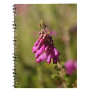 Blumen eines Dorset-Heide (Heidekraut cilaris) Spiral Notizblock