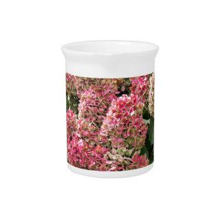 Blumen eines Franzosen Hydrangea (Hydrangea Getränke Pitcher