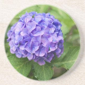 Blumen eines Franzosen Hydrangea (Hydrangea Getränkeuntersetzer