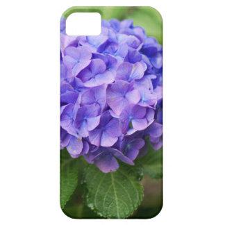 Blumen eines Franzosen Hydrangea (Hydrangea iPhone 5 Etui