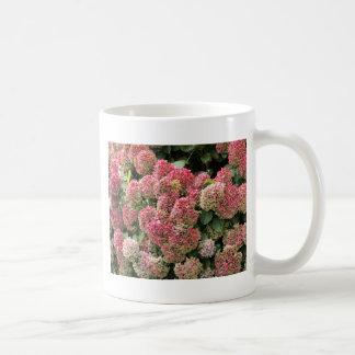 Blumen eines Franzosen Hydrangea (Hydrangea Kaffeetasse