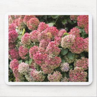 Blumen eines Franzosen Hydrangea (Hydrangea Mousepad