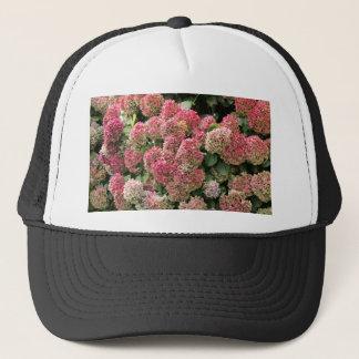 Blumen eines Franzosen Hydrangea (Hydrangea Truckerkappe