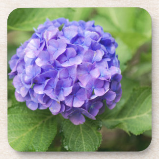Blumen eines Franzosen Hydrangea (Hydrangea Untersetzer