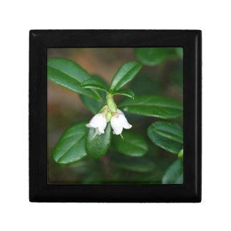 Blumen eines wilden Lingonberry (Vaccinium Geschenkbox