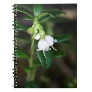 Blumen eines wilden Lingonberry (Vaccinium Spiral Notizblock