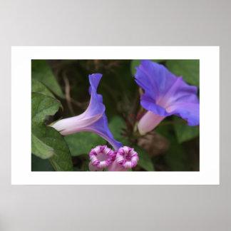 Blumen-Garten-Blumenphotographie Poster