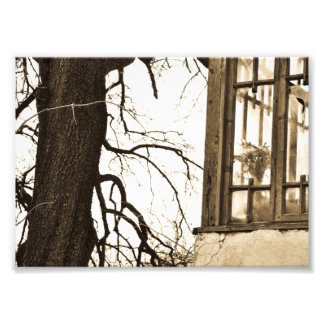 Blumen im alten Haus-Foto-Druck Fotodrucke