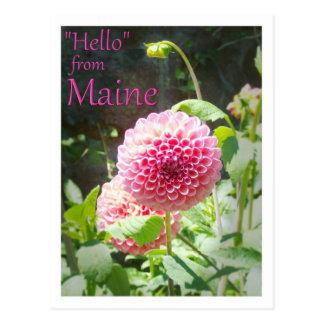 Blumen im Bar-Hafen, Maine Postkarte