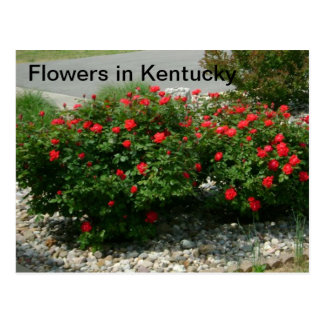 Blumen in Kentucky Postkarte