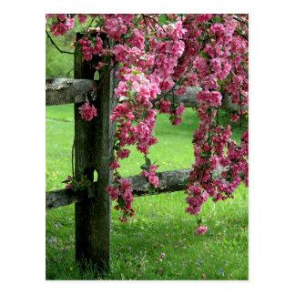 Blumen-Kaskade Postkarte