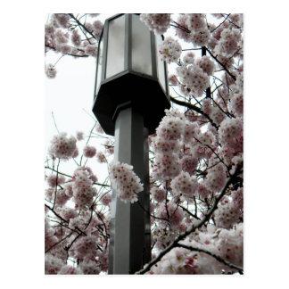 Blumen-Lampe Postkarte