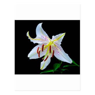 Blumen-Lilien-Blüten-Polterabend-Liebe-Frieden Postkarte