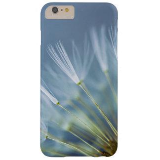 Blumen-Löwenzahn-Samen-Kopf Barely There iPhone 6 Plus Hülle