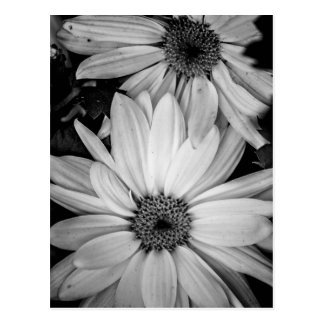 Blumen-Postkarte Postkarte