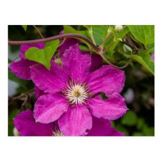Blumen Robinettes an Apple Haus u. an der Postkarte