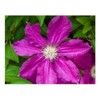 Blumen Robinettes an Apple Haus und an der Postkarte