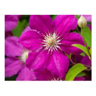 Blumen Robinettes an Apple Haus und an Postkarte
