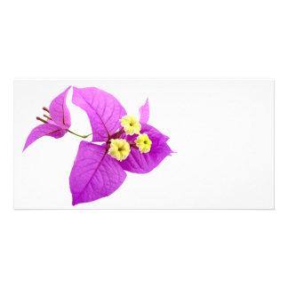 Blumen Sankt Rita Karte