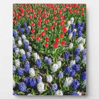 Blumen stellen mit roten blauen Tulpen und Fotoplatte