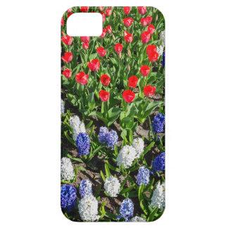 Blumen stellen mit roten blauen Tulpen und iPhone 5 Etui