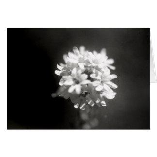 Blumen-Studie 6 Grußkarte