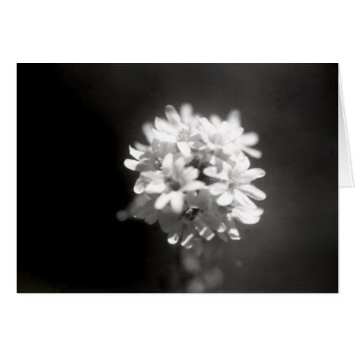 Blumen-Studie 6 Karten
