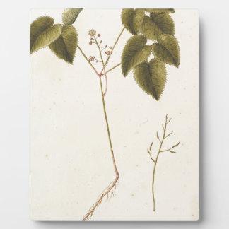 Blumen-Studie - Watercolor Fotoplatte