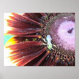 Blumen- und Bienengleichgestelltbestäubung! Poster