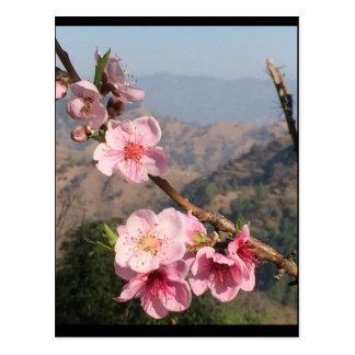 Blumen und Mountain View Hintergrund von Indien Postkarte