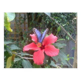 Blumen und Schmetterlinge in Franche Comte Postkarte