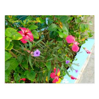 Blumen von Jamaika Postkarte