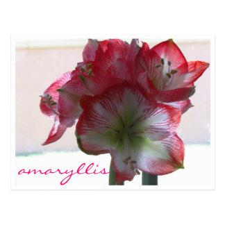 Blumenamaryllis-Birnenpostkarte Postkarte