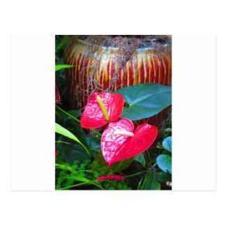 BlumenblumenFotos von Longwood Gärten Postkarte