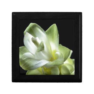 Blumenblüten bilden weißer Liebe-Kuss Erinnerungskiste