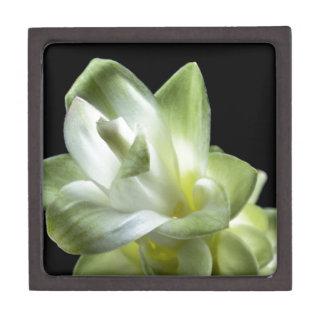 Blumenblüten bilden weißer Liebe-Kuss Schachtel