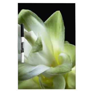 Blumenblüten bilden weißer Liebe-Kuss Trockenlöschtafel